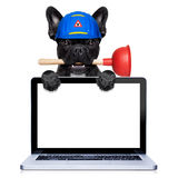 Plumber dog with plunger Stock Photos