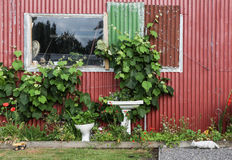 Plumbers Garden. With a grape vine growing well Royalty Free Stock Images