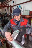 Plumbing engineer  repairman working in boiler room,  insulates Stock Photography