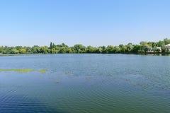 Plumbuita湖在布加勒斯特有植被的Calm湖Colentina区在背景中 免版税库存照片