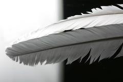 Plume photo libre de droits