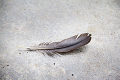 A plume on cement floor Royalty Free Stock Photography