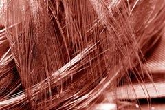 Plume colorée de coq avec des réflexions Image libre de droits
