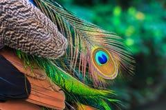 Plume colorée de paon Photos stock