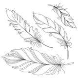 Plume décorative sans paire de vecteur Image libre de droits