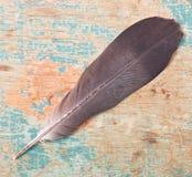 Plume d'oiseau Photos libres de droits