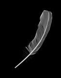 Plume d'oiseau blanche dessinée sur le fond noir Illustration de vecteur illustration libre de droits