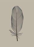 Plume d'oiseau noire dessinée dans l'illustration de vecteur illustration de vecteur