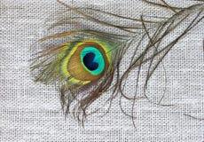 Plume d'une queue du ` s de paon se trouvant sur le tissu de toile Photographie stock libre de droits