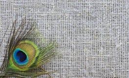 Plume d'une queue du ` s de paon se trouvant sur le tissu de toile Images libres de droits