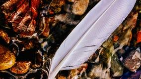 plume de flottement sur le teme photographie stock