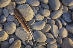 Plume de mouette sur Ruby Beach Images libres de droits