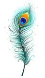 Plume de paon sur un fond blanc Image stock