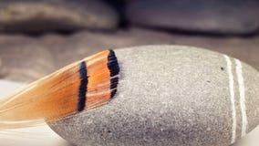 Plume du faisan d'or Image libre de droits