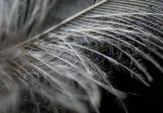 Plume en noir et blanc photos libres de droits