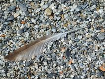A plume in the grit beach Stock Photography