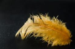 Plume jaune sur un fond foncé photographie stock