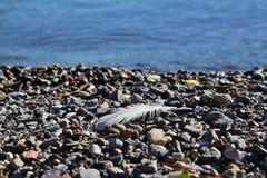 Plume sur la plage Photographie stock libre de droits