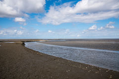 Plume sur le marais Photo libre de droits
