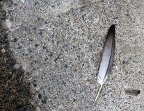 Plume sur le trottoir de ciment Image libre de droits