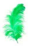 Plume verte d'une autruche Photos libres de droits