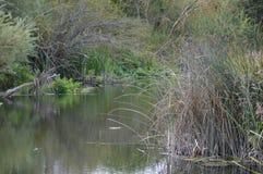 Plumed река стоковая фотография