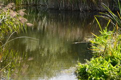 Plumed река стоковое фото