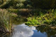 Plumed Fluss lizenzfreie stockbilder