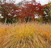 Plumed Gras im Herbst Stockfotos