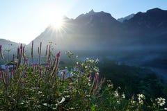 Plumedhanekam met zonsopgang, berg, mist in de koude lucht royalty-vrije stock fotografie