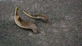Plumeriaâ€-‹Blatt auf dem Boden stockfoto