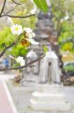 Plumeria, árbol de pagoda, templo fotografía de archivo libre de regalías