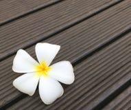 Plumeria ή λουλούδι Frangipani στο ξύλινο υπόβαθρο Στοκ Εικόνες