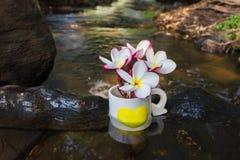Plumeria ή frangipani λουλουδιών στο φλυτζάνι σχεδίων καρδιών στο ροκ χαλικιών Στοκ εικόνα με δικαίωμα ελεύθερης χρήσης