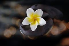 plumeria ή frangipani λουλουδιών στο χαλίκι και νερό στο χρυσό bokeh Στοκ εικόνα με δικαίωμα ελεύθερης χρήσης