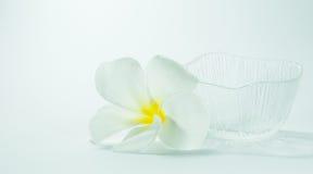 Plumeria και κύπελλο Στοκ εικόνες με δικαίωμα ελεύθερης χρήσης