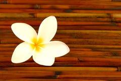 plumeria λουλουδιών μπαμπού Στοκ Εικόνες