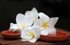 Plumeria με την καφετιά αγγειοπλαστική Στοκ Εικόνες