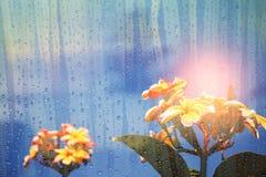 Plumeria με το μπλε ουρανό ορατό μέσω του γυαλιού Στοκ Εικόνες
