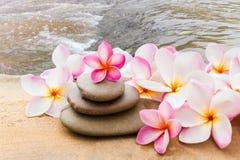 Plumeria λουλουδιών ή γλυκό frangipani που διακοσμείται στο βράχο χαλικιών μέσα Στοκ Φωτογραφίες
