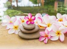 Plumeria λουλουδιών ή γλυκό frangipani που διακοσμείται στο βράχο χαλικιών μέσα Στοκ Εικόνες