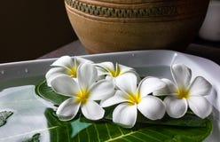 Plumeria λουλουδιών με το εκλεκτής ποιότητας βάζο Στοκ Εικόνα