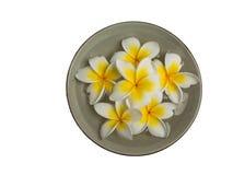 Plumeria στα πιάτα Στοκ εικόνα με δικαίωμα ελεύθερης χρήσης