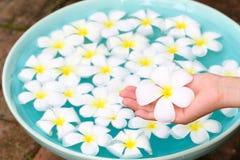 Plumeria στη διάθεση με τη λεκάνη celadon Στοκ εικόνες με δικαίωμα ελεύθερης χρήσης
