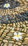 Plumeria στον κυβόλινθο Στοκ Φωτογραφία