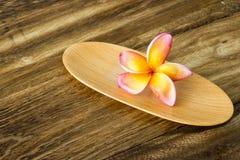 Plumeria στον ξύλινο δίσκο Στοκ Φωτογραφίες