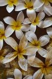 Plumeria στο ιερό νερό Στοκ Εικόνα