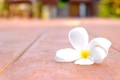 Plumeria στο ξύλινο πάτωμα Στοκ Εικόνες