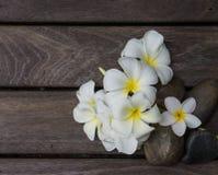 Plumeria στο ξύλινο πάτωμα Στοκ φωτογραφία με δικαίωμα ελεύθερης χρήσης
