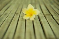 Plumeria στο ξύλινο υπόβαθρο μπαμπού Στοκ φωτογραφίες με δικαίωμα ελεύθερης χρήσης